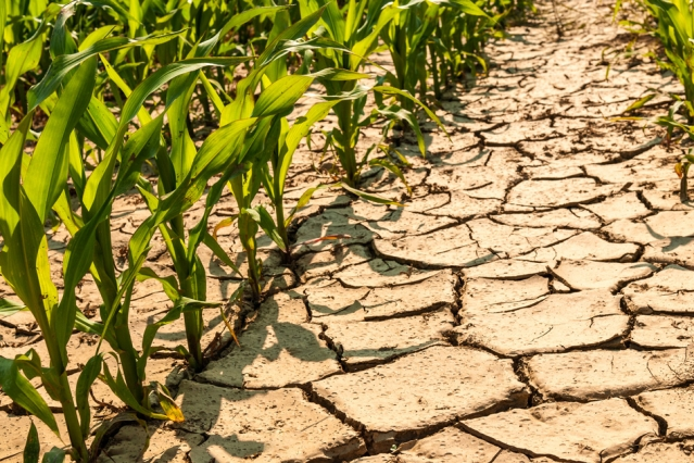 MIT scientists have found that climate change will likely worsen drought conditions in parts of Africa, dramatically reshaping the production of maize throughout sub-Saharan Africa as global temperatures rise over the next century.